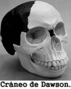 Cráneo de Dawson