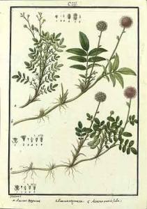 Planta-1