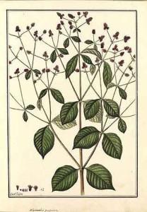 Planta-2