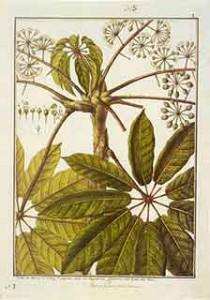 Planta-5
